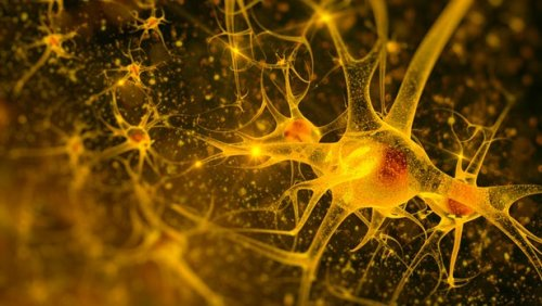 """Ученые выяснили, что активность мозга и его """"вычислительная мощность"""" могут быть в 100 раз выше, чем было принято считать ранее."""