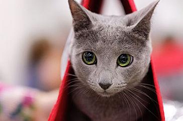 Кошки умеют реагировать на свое имя, доказали ученые