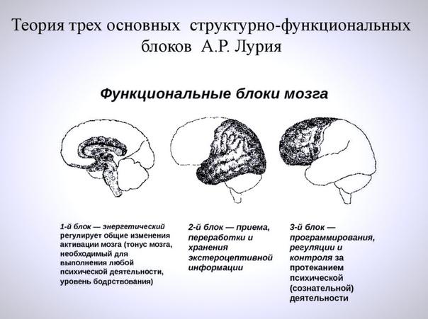 Теории и модели работы мозга фото савичева